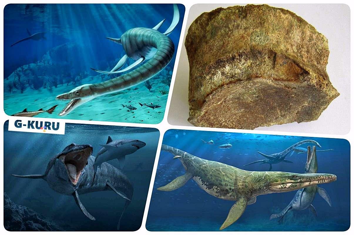 Каменск-Уральский морской ящер
