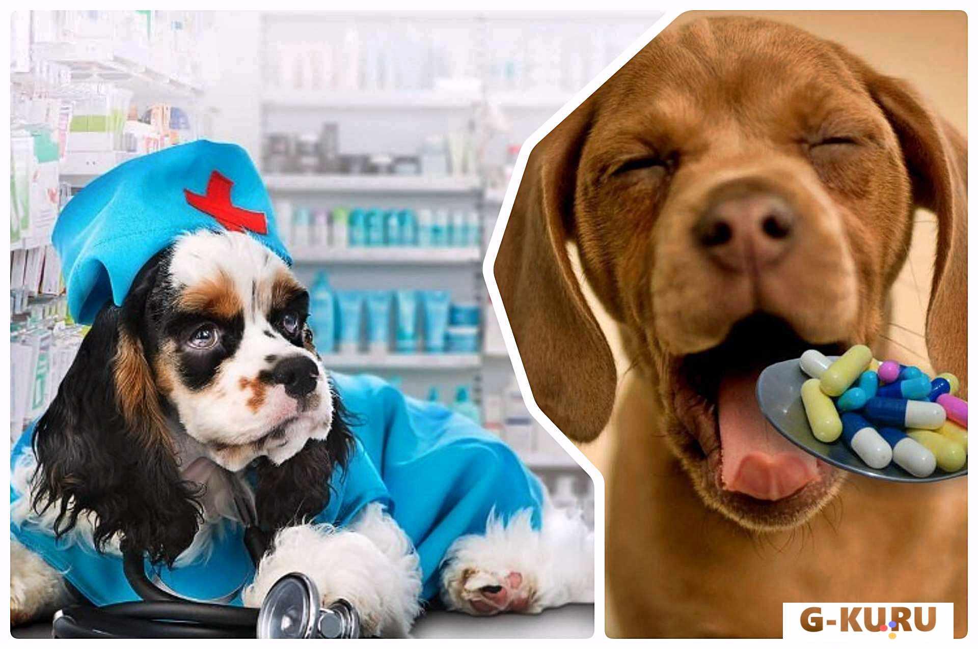 Новые правила хранения лекарств ветеринарного применения