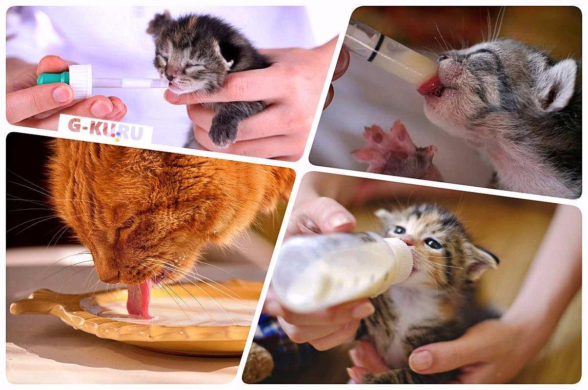 А у нас сегодня кошка Родила вчера котят... А у вас?